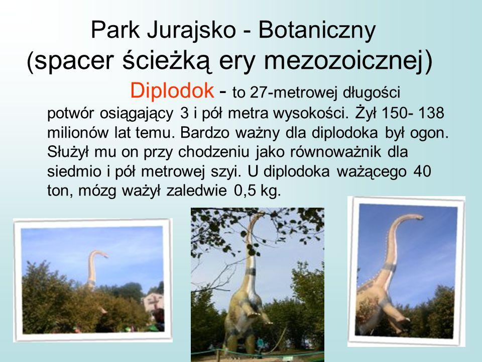 Park Jurajsko - Botaniczny ( spacer ścieżką ery mezozoicznej) Diplodok - to 27-metrowej długości potwór osiągający 3 i pół metra wysokości. Żył 150- 1