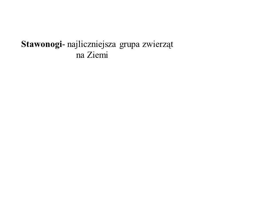 Systematyka: Typ: Stawonogi (Arthropoda) Podtyp: Trylobitowce Gromada: Trylobity Podtyp: Szczękoczułkowce Gromada: Pajęczaki Gromada: Staroraki Podtyp: Żuwaczkowce Gromada: Skorupiaki Gromada: Wije Gromada: Owady skrzypłocz