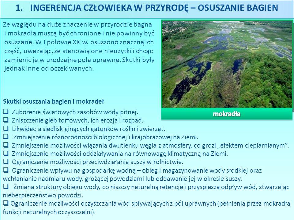 1.INGERENCJA CZŁOWIEKA W PRZYRODĘ – OSUSZANIE BAGIEN Ze względu na duże znaczenie w przyrodzie bagna i mokradła muszą być chronione i nie powinny być