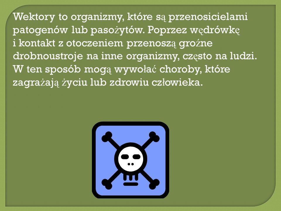 Wektory to organizmy, które s ą przenosicielami patogenów lub paso ż ytów. Poprzez w ę drówk ę i kontakt z otoczeniem przenosz ą gro ź ne drobnoustroj