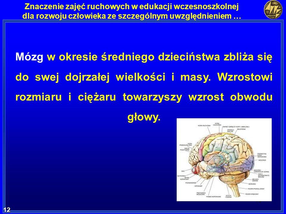 12 12 Znaczenie zajęć ruchowych w edukacji wczesnoszkolnej dla rozwoju człowieka ze szczególnym uwzględnieniem … Mózg w okresie średniego dzieciństwa