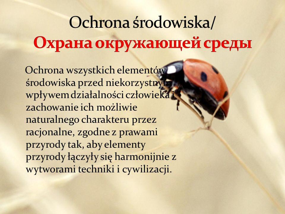 Nauka o strukturze i funkcjonowaniu przyrody, zajmująca się badaniem oddziaływań pomiędzy organizmami a ich środowiskiem oraz wzajemnie między tymi organizmami (strukturą ekosystemów).