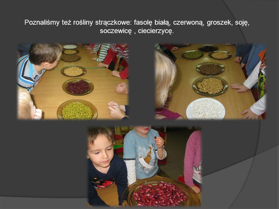 Poznaliśmy też rośliny strączkowe: fasolę białą, czerwoną, groszek, soję, soczewicę, ciecierzycę.