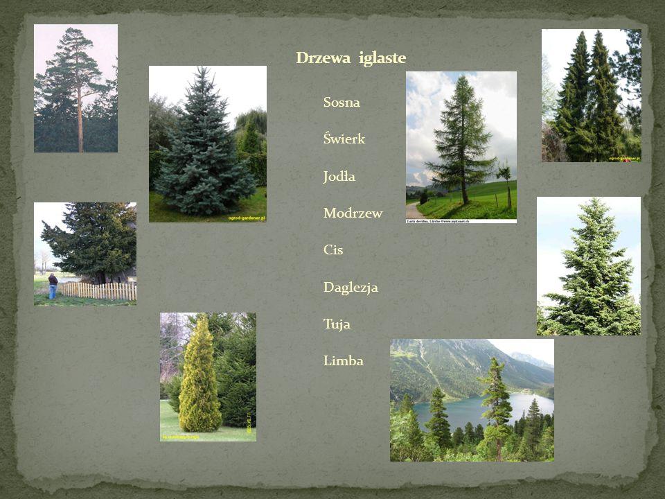Rodzaje obróbki drewna: obróbka drewna mechaniczna, obróbka drewna cieplno-wodna lub hydrotermiczna, obróbka drewna chemiczna, obróbka drewna fizykochemiczna, obróbka drewna pierwiastkowa obróbka drewna wtórna.