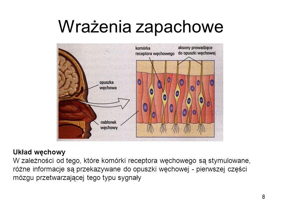8 Wrażenia zapachowe Układ węchowy W zależności od tego, które komórki receptora węchowego są stymulowane, różne informacje są przekazywane do opuszki