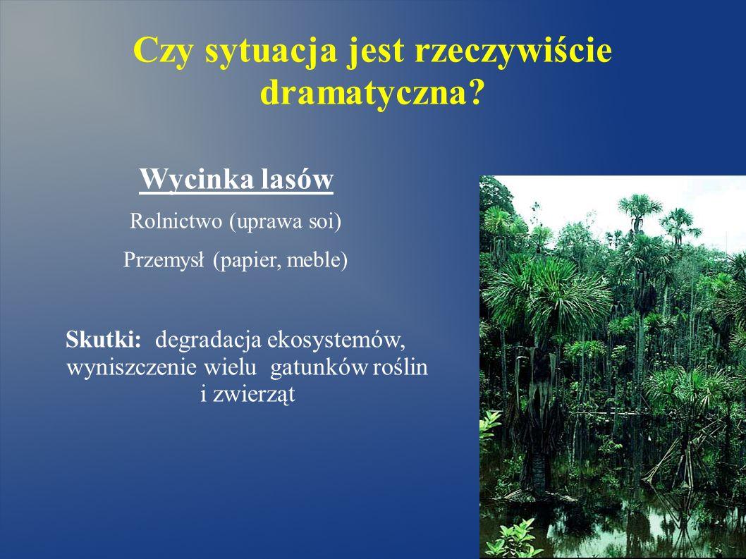 Czy sytuacja jest rzeczywiście dramatyczna? Wycinka lasów Rolnictwo (uprawa soi) Przemysł (papier, meble) Skutki: degradacja ekosystemów, wyniszczenie