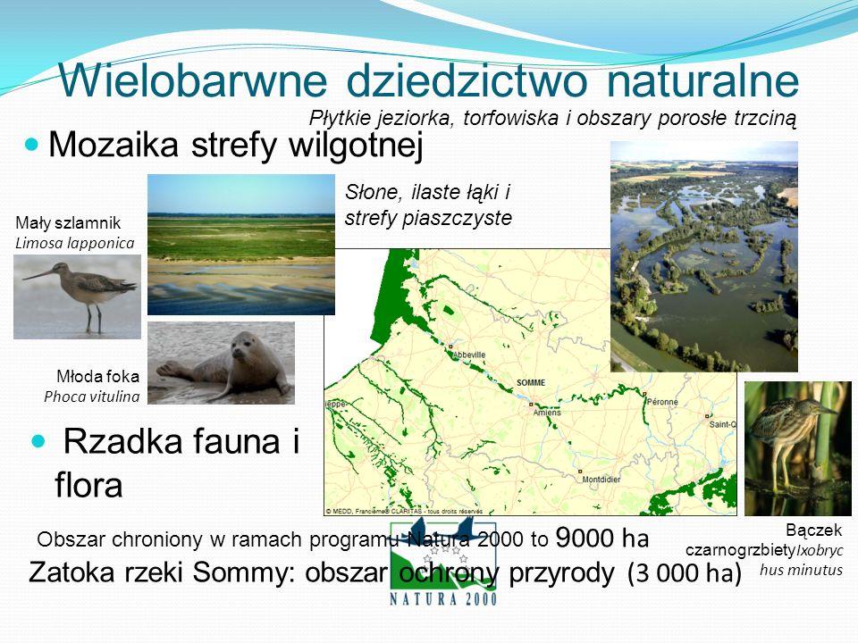 Złożona typologia Naturalna Somma Stara Somma i Somma skanalizowana Kanał morski Poprzecinane kanałami moczary, na których uprawia się jarzyny