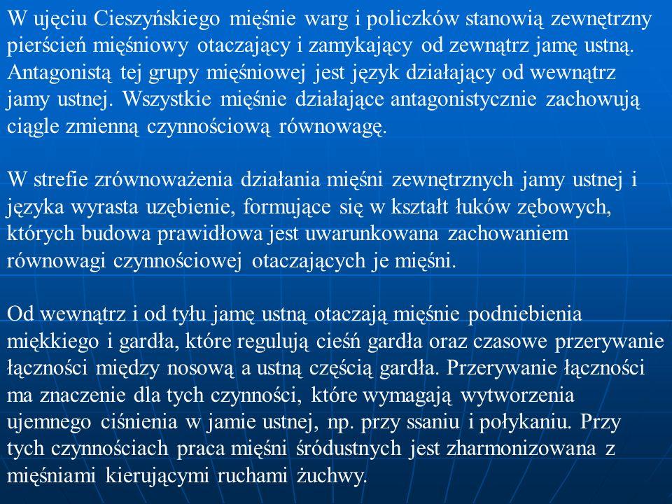 W ujęciu Cieszyńskiego mięśnie warg i policzków stanowią zewnętrzny pierścień mięśniowy otaczający i zamykający od zewnątrz jamę ustną. Antagonistą te