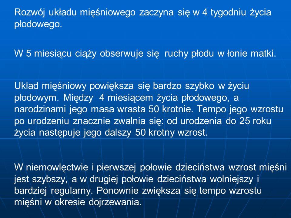 Według Gilewicza okres rozwojowy pracy mięśniowej dziecka można podzielić na IV etapy okres do 3 r.