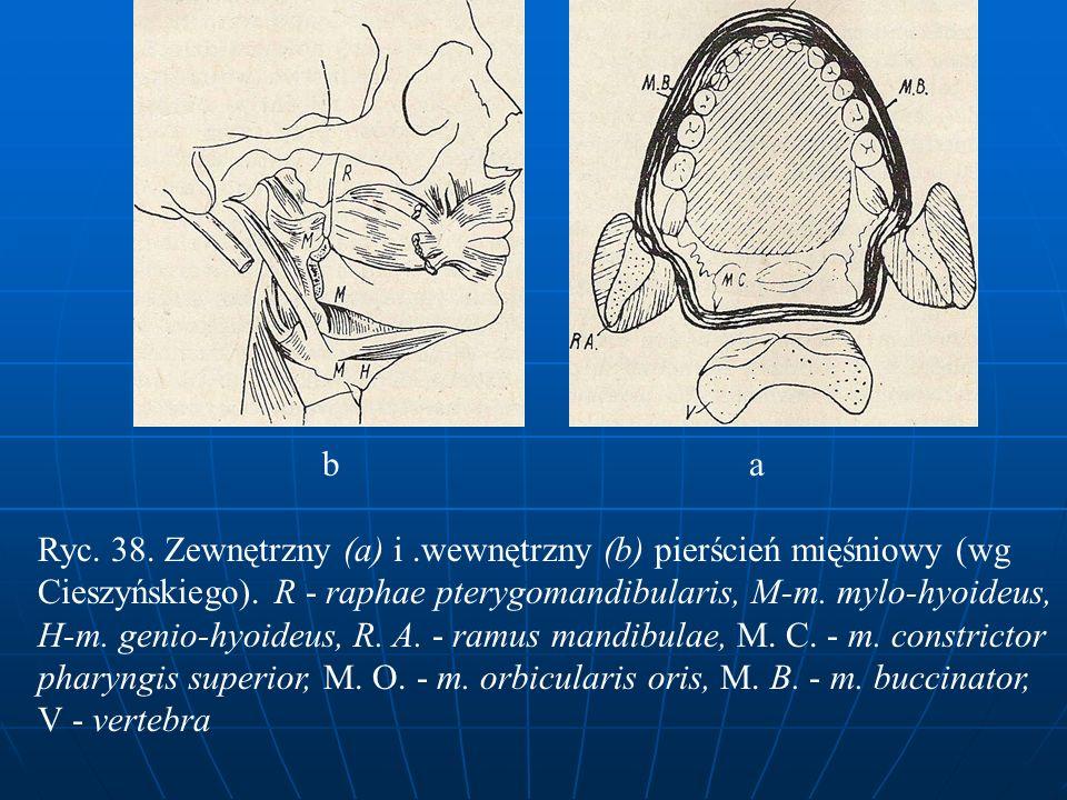 b a Ryc. 38. Zewnętrzny (a) i.wewnętrzny (b) pierścień mięśniowy (wg Cieszyńskiego). R - raphae pterygomandibularis, M-m. mylo-hyoideus, H-m. genio-hy
