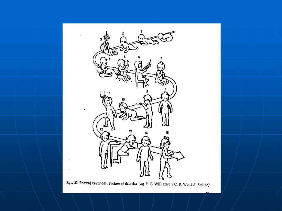 Narząd żucia składa się z elementów statycznych oraz dynamicznych.