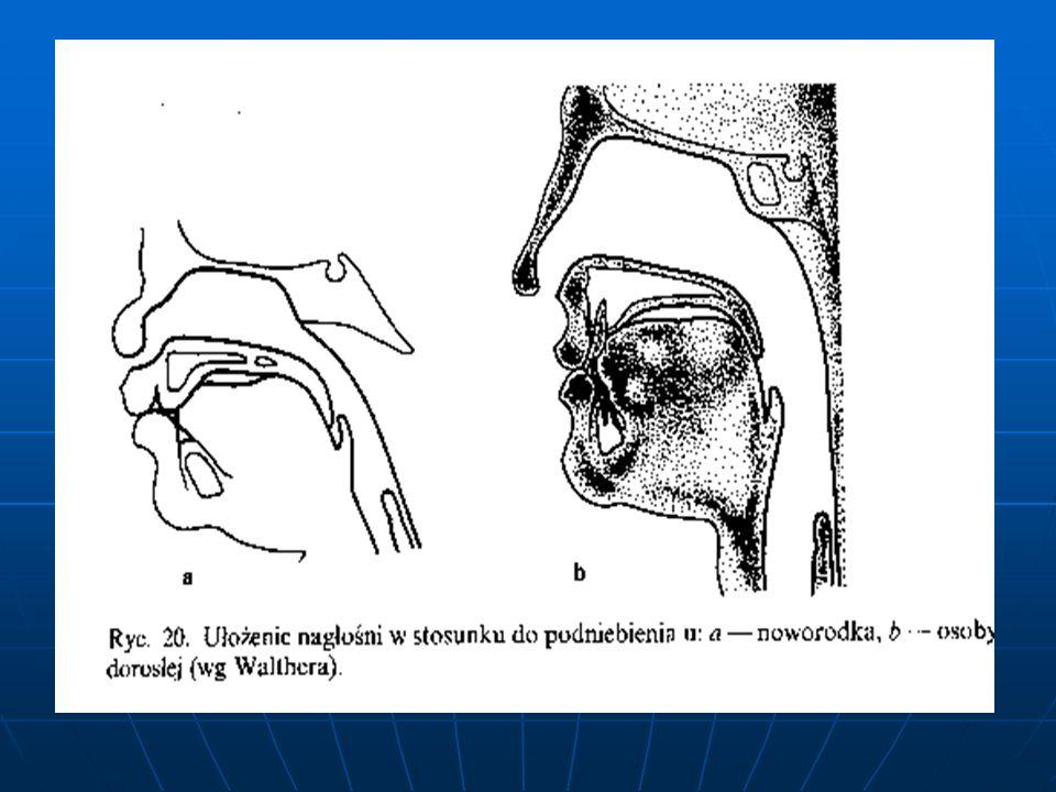 Przebieg czynności żucia, zaczynający się od fazy zwarcia łuków zębowych, jest dalej kierowany przez stosunki zgryzowe w obrębie zębów przednich.