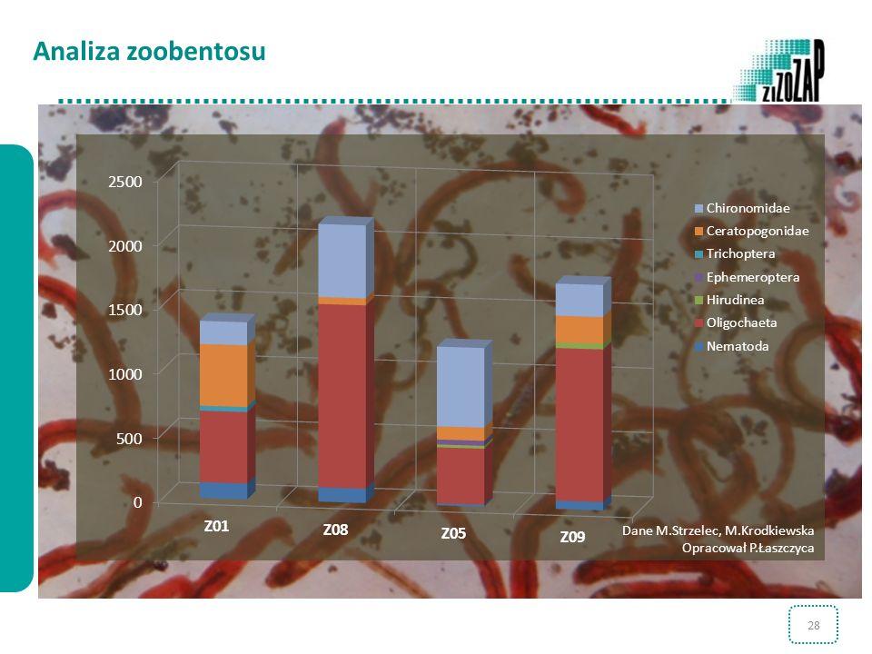 28 Analiza zoobentosu Dane M.Strzelec, M.Krodkiewska Opracował P.Łaszczyca