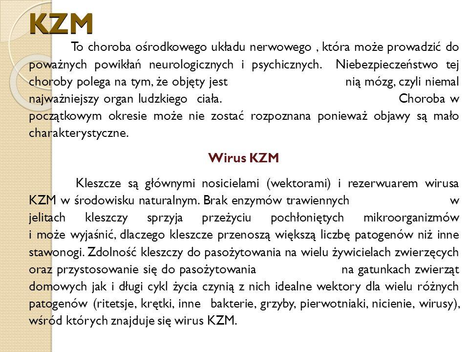 KZM To choroba ośrodkowego układu nerwowego, która może prowadzić do poważnych powikłań neurologicznych i psychicznych.
