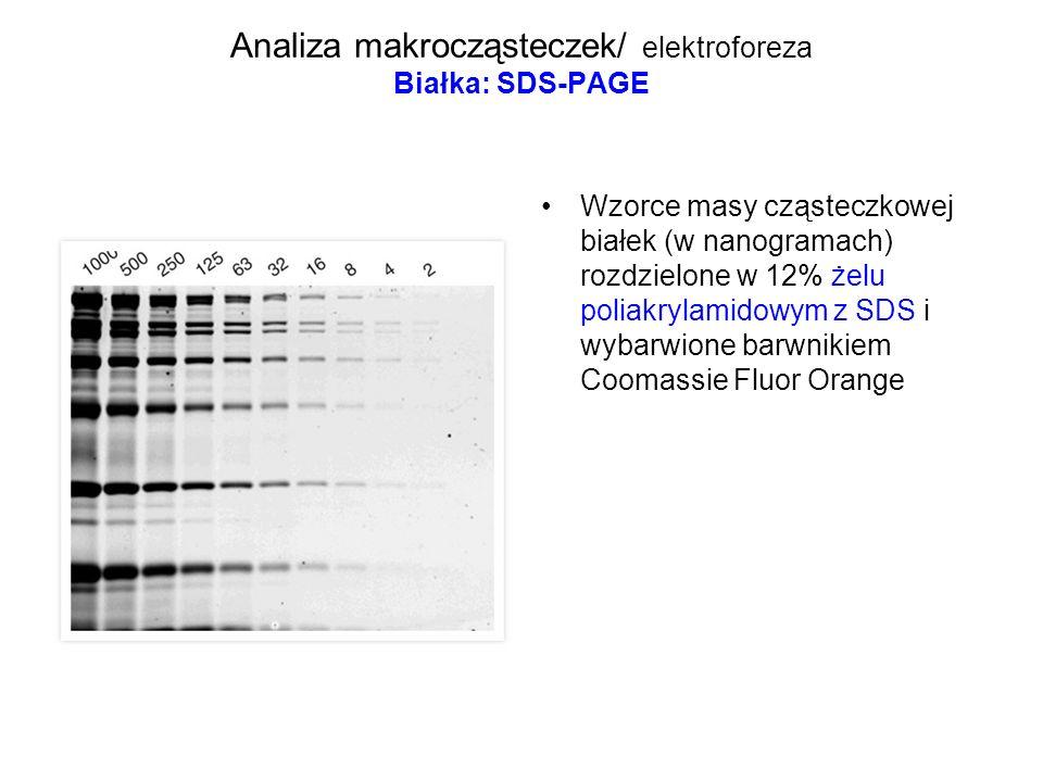 Analiza makrocząsteczek/ elektroforeza Białka: SDS-PAGE Wzorce masy cząsteczkowej białek (w nanogramach) rozdzielone w 12% żelu poliakrylamidowym z SD