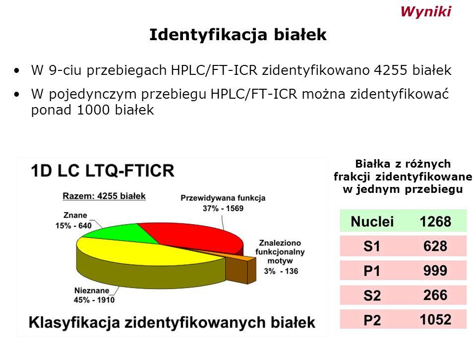 Identyfikacja białek W 9-ciu przebiegach HPLC/FT-ICR zidentyfikowano 4255 białek W pojedynczym przebiegu HPLC/FT-ICR można zidentyfikować ponad 1000 b