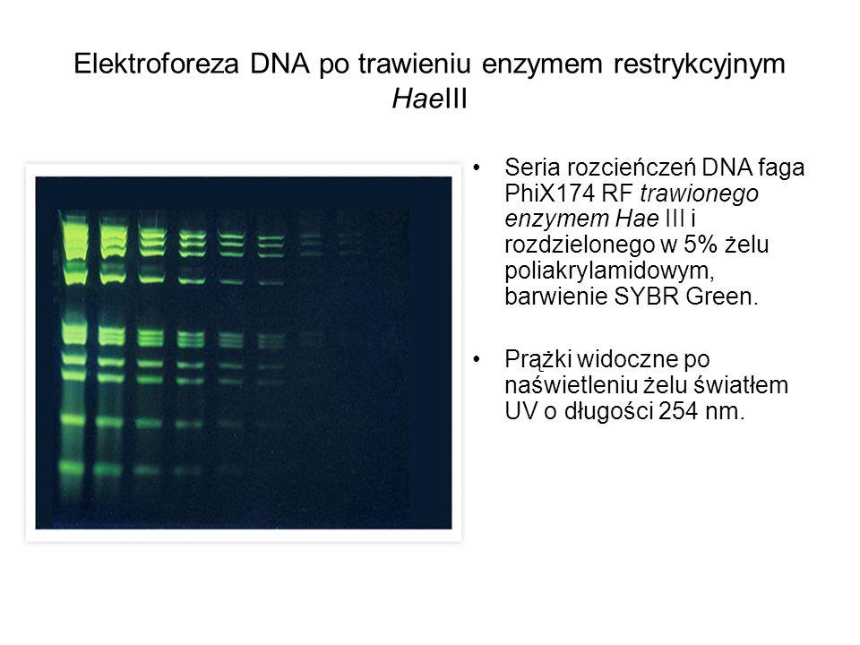 Elektroforeza DNA po trawieniu enzymem restrykcyjnym HaeIII Seria rozcieńczeń DNA faga PhiX174 RF trawionego enzymem Hae III i rozdzielonego w 5% żelu