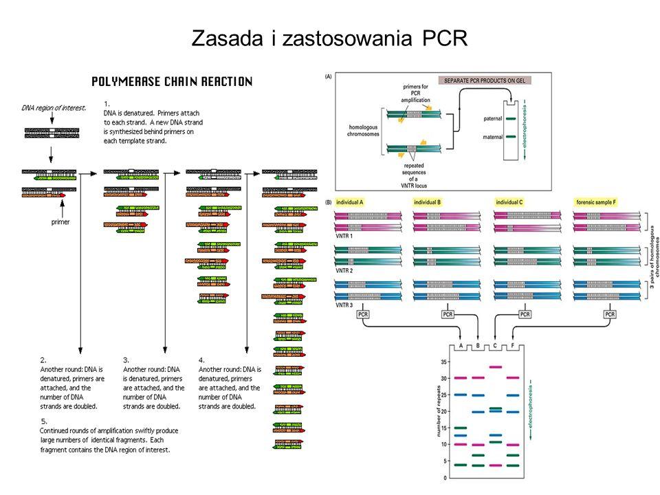 Zasada i zastosowania PCR