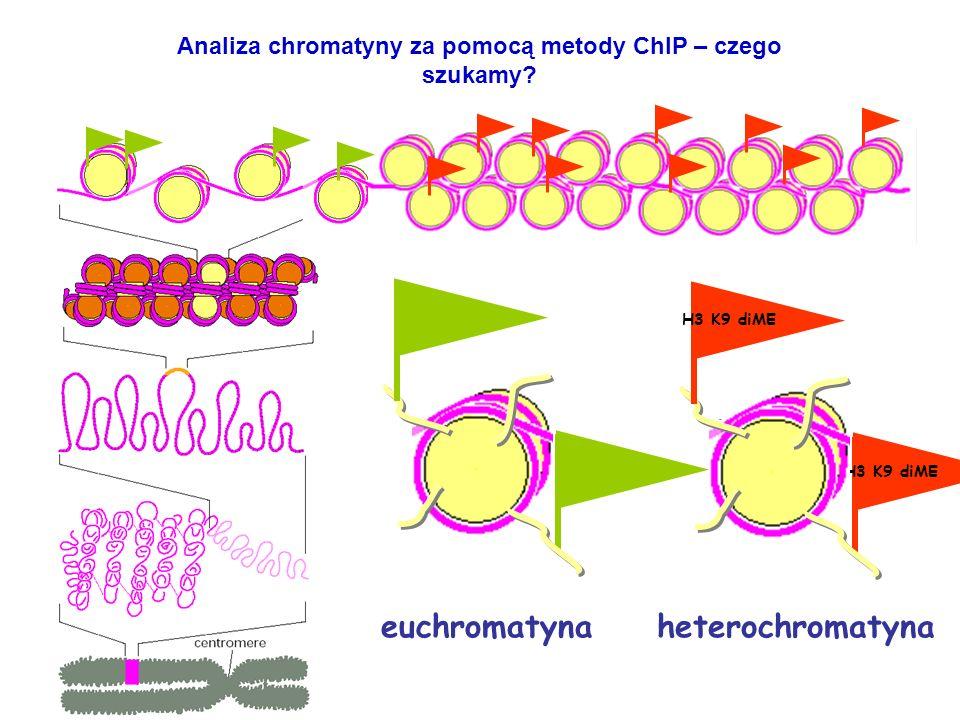 Analiza chromatyny za pomocą metody ChIP – czego szukamy? H3 K9 diME euchromatynaheterochromatyna