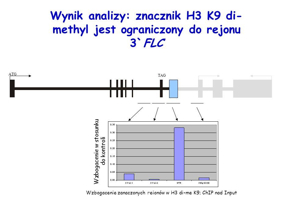 Wzbogacenie zanaczonych reionów w H3 di-me K9; ChIP nad Input Wzbogacenie w stosunku do kontroli Wynik analizy: znacznik H3 K9 di- methyl jest ogranic