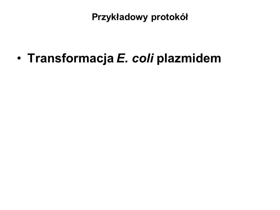 Przykładowy protokół Transformacja E. coli plazmidem