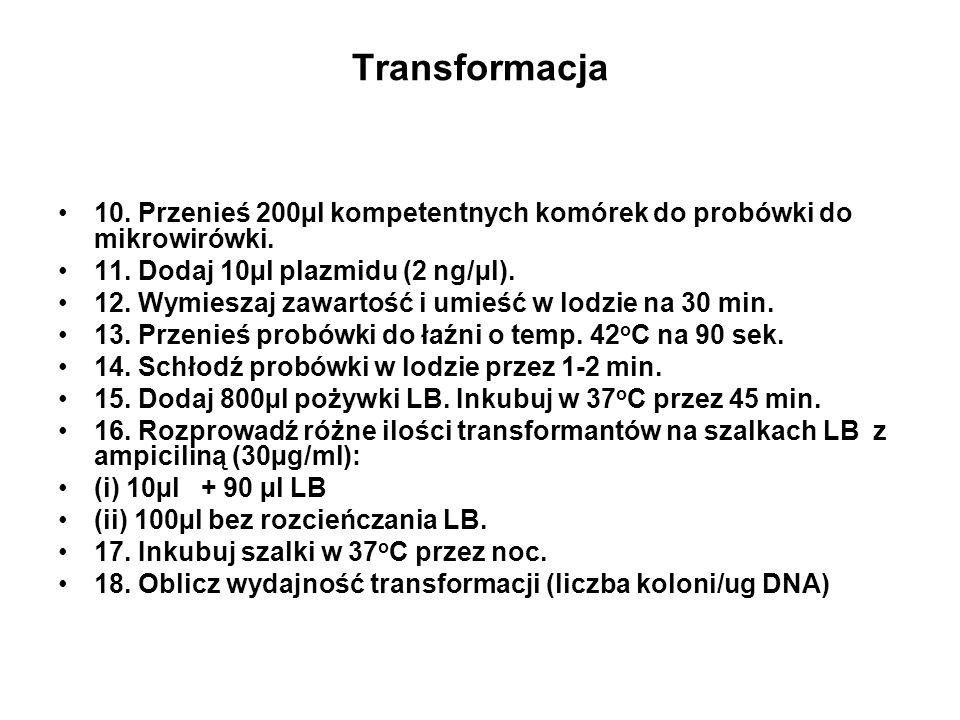 Transformacja 10. Przenieś 200µl kompetentnych komórek do probówki do mikrowirówki. 11. Dodaj 10µl plazmidu (2 ng/µl). 12. Wymieszaj zawartość i umieś