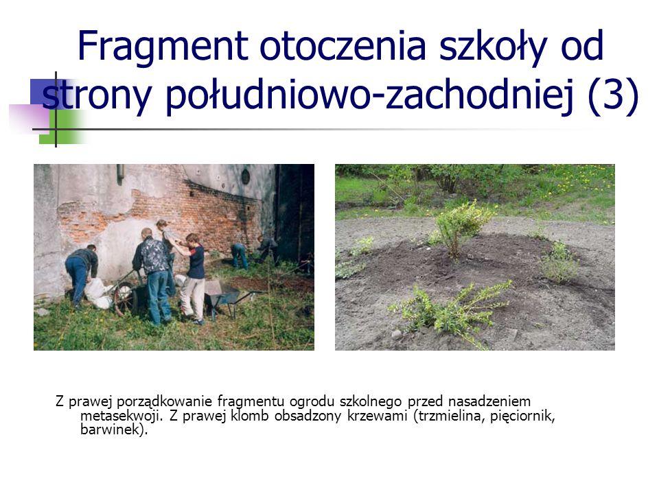 Z prawej porządkowanie fragmentu ogrodu szkolnego przed nasadzeniem metasekwoji. Z prawej klomb obsadzony krzewami (trzmielina, pięciornik, barwinek).
