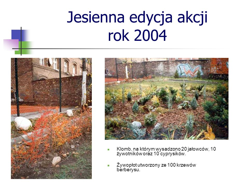 Jesienna edycja akcji rok 2004 Klomb, na którym wysadzono 20 jałowców, 10 żywotników oraz 10 cyprysików. Żywopłot utworzony ze 100 krzewów berberysu.