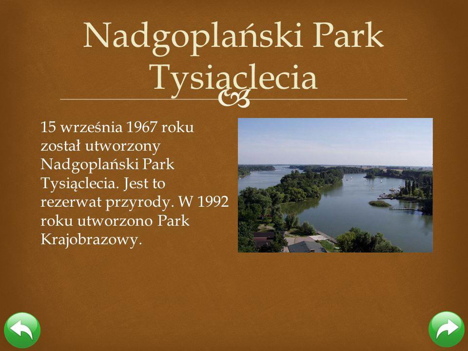 15 września 1967 roku został utworzony Nadgoplański Park Tysiąclecia. Jest to rezerwat przyrody. W 1992 roku utworzono Park Krajobrazowy. Nadgoplański