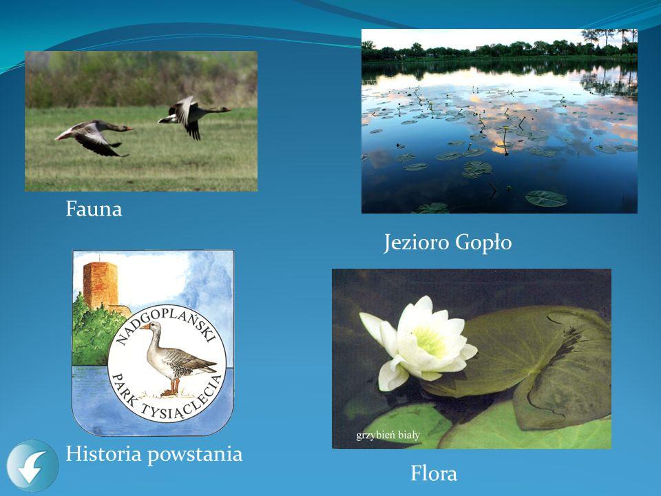 Fauna Flora Historia powstania Jezioro Gopło