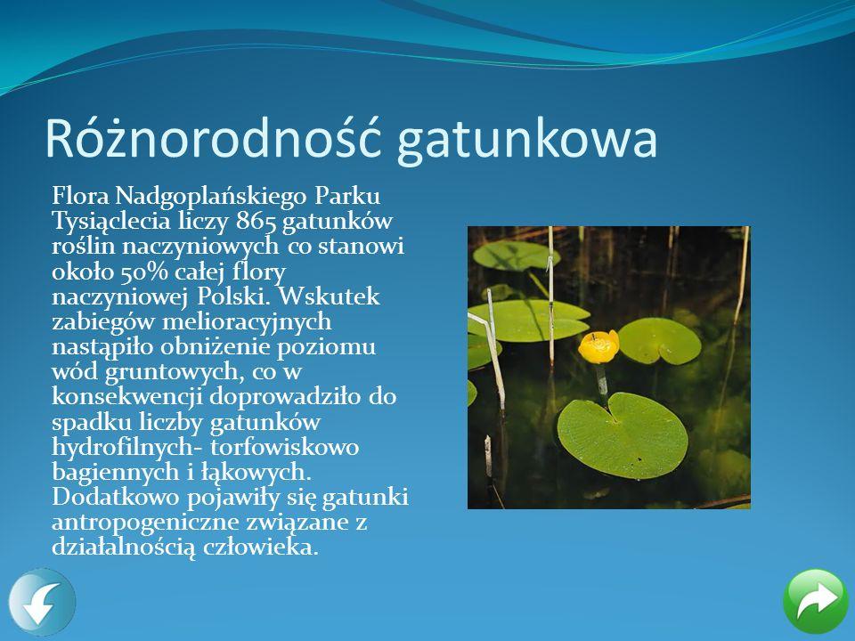 Różnorodność gatunkowa Flora Nadgoplańskiego Parku Tysiąclecia liczy 865 gatunków roślin naczyniowych co stanowi około 50% całej flory naczyniowej Pol