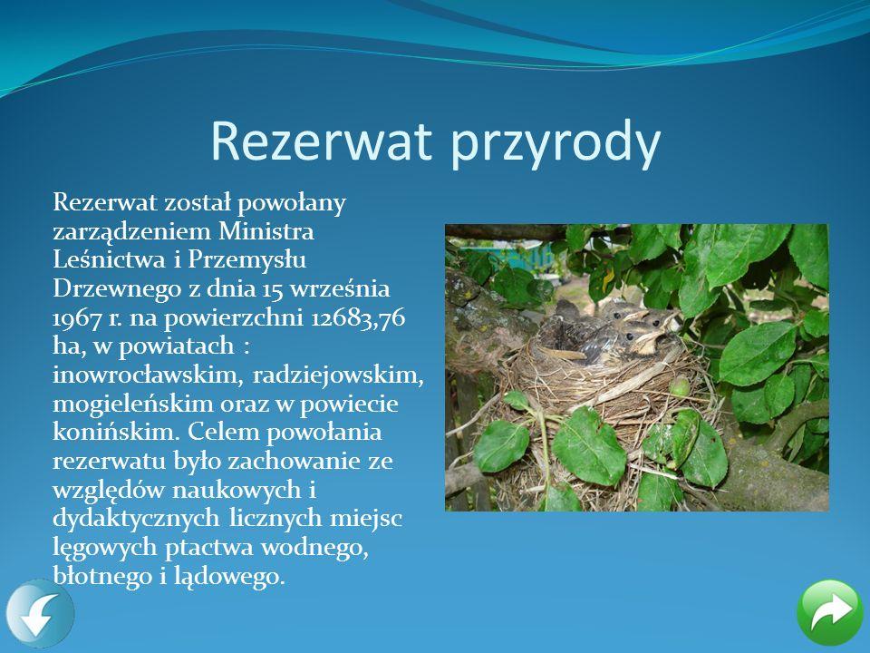 Rezerwat przyrody Rezerwat został powołany zarządzeniem Ministra Leśnictwa i Przemysłu Drzewnego z dnia 15 września 1967 r. na powierzchni 12683,76 ha