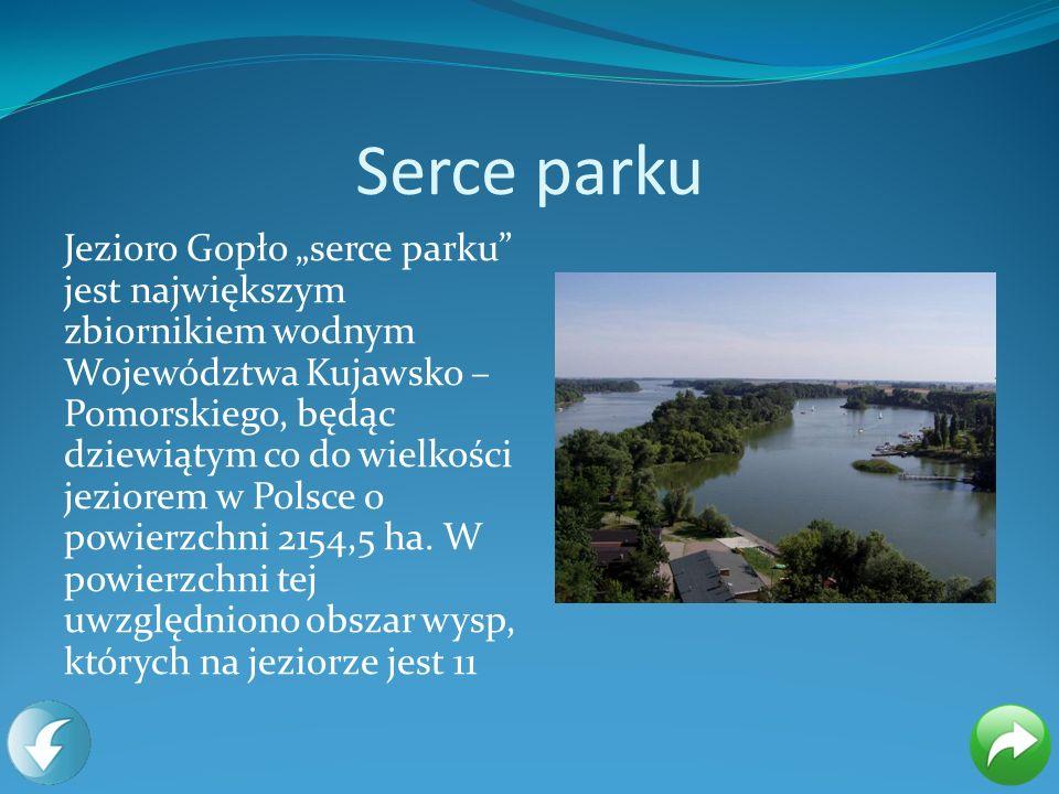 Serce parku Jezioro Gopło serce parku jest największym zbiornikiem wodnym Województwa Kujawsko – Pomorskiego, będąc dziewiątym co do wielkości jeziore