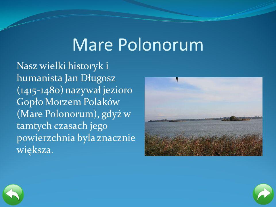 Mare Polonorum Nasz wielki historyk i humanista Jan Długosz (1415-1480) nazywał jezioro Gopło Morzem Polaków (Mare Polonorum), gdyż w tamtych czasach