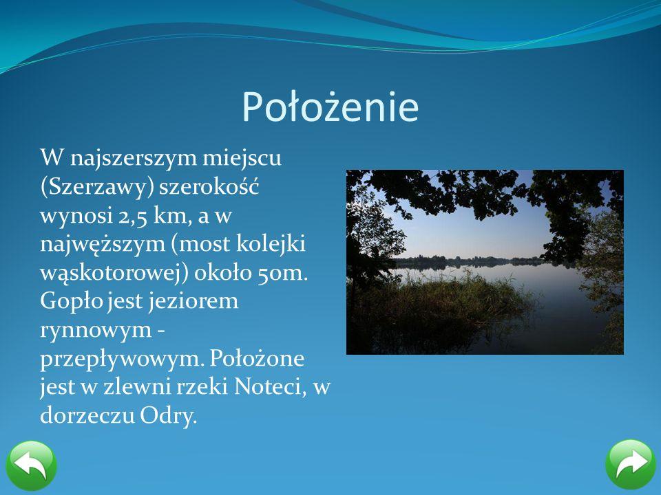 Położenie W najszerszym miejscu (Szerzawy) szerokość wynosi 2,5 km, a w najwęższym (most kolejki wąskotorowej) około 50m. Gopło jest jeziorem rynnowym