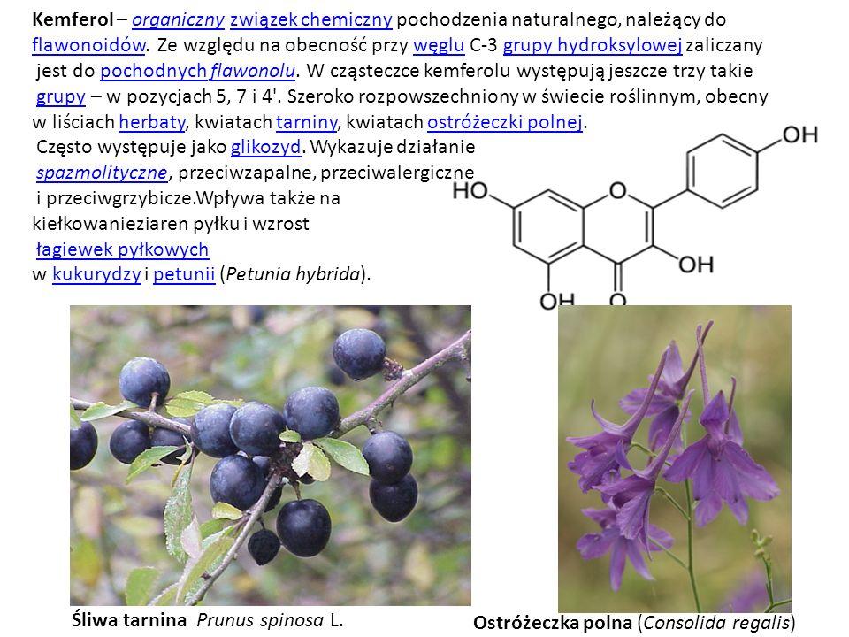 Kemferol – organiczny związek chemiczny pochodzenia naturalnego, należący doorganicznyzwiązek chemiczny flawonoidówflawonoidów. Ze względu na obecność
