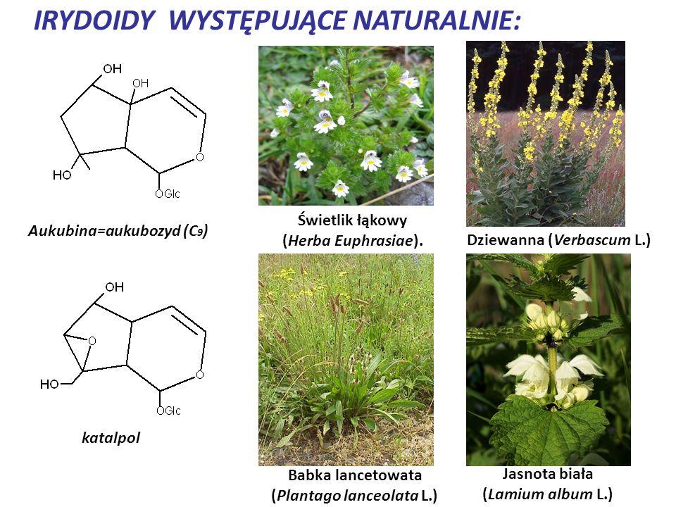 IRYDOIDY WYSTĘPUJĄCE NATURALNIE: Aukubina=aukubozyd (C 9 ) katalpol Świetlik łąkowy (Herba Euphrasiae). Babka lancetowata (Plantago lanceolata L.) Dzi