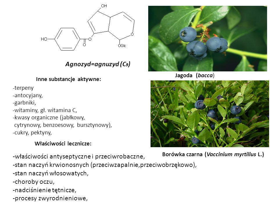 Agnozyd=agnuzyd (C 9 ) Borówka czarna (Vaccinium myrtillus L.) Jagoda (bacca) Właściwości lecznicze: -właściwości antyseptyczne i przeciwrobaczne, -st