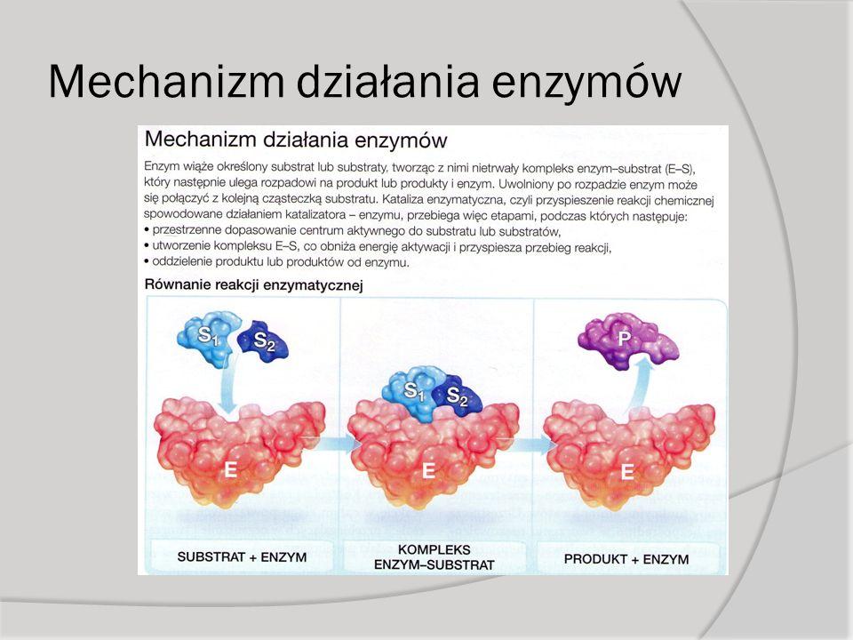 Mechanizm działania enzymów