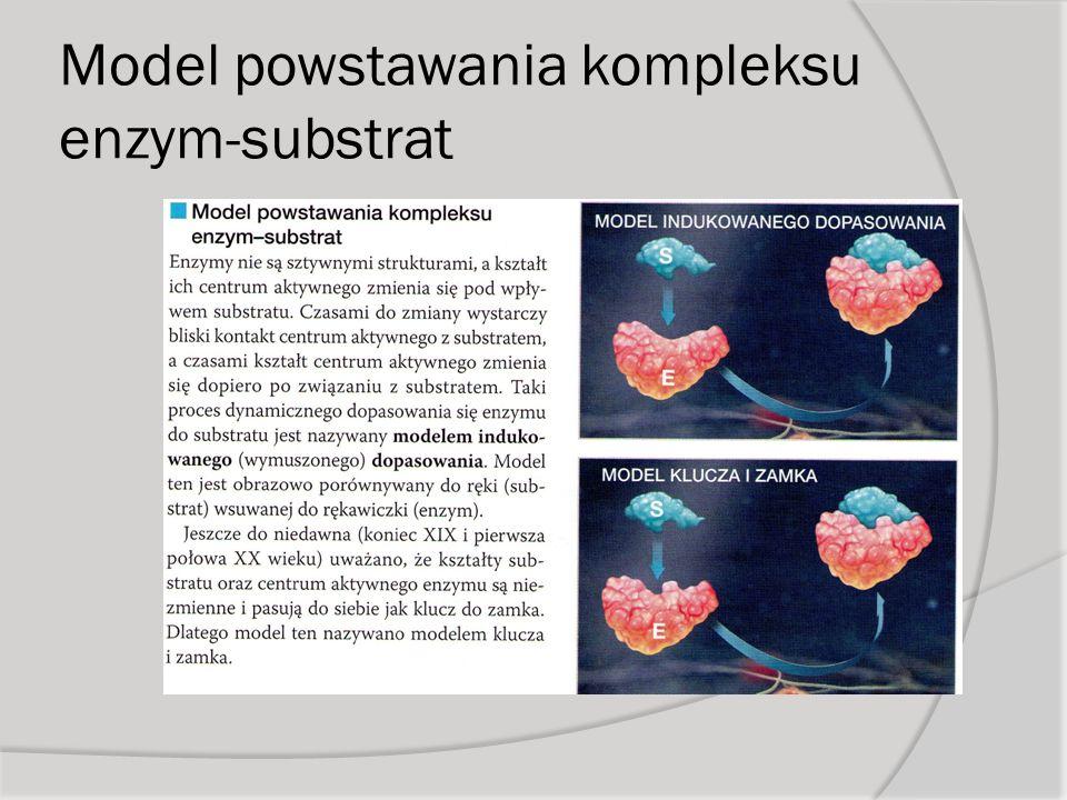 Model powstawania kompleksu enzym-substrat