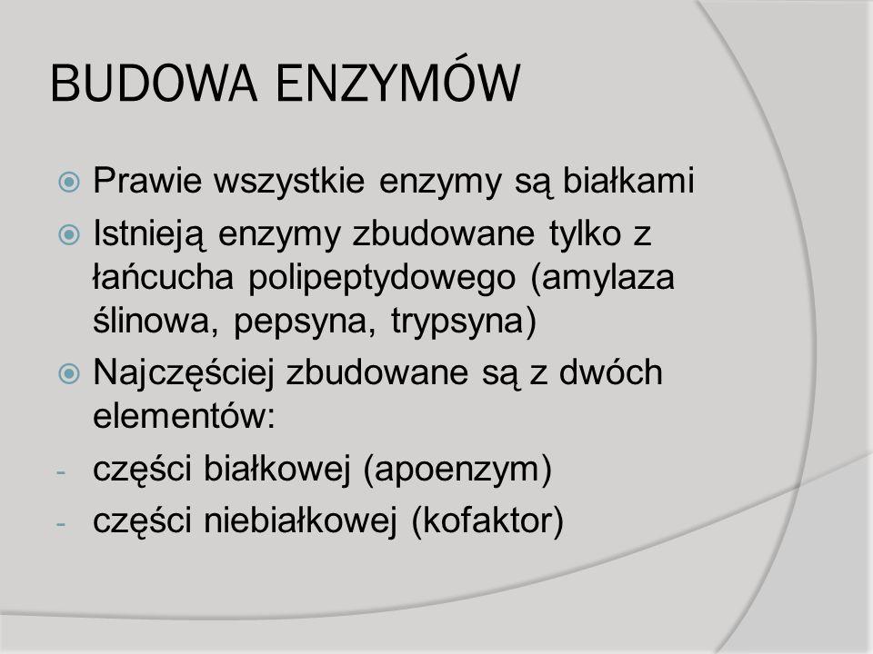 BUDOWA ENZYMÓW Prawie wszystkie enzymy są białkami Istnieją enzymy zbudowane tylko z łańcucha polipeptydowego (amylaza ślinowa, pepsyna, trypsyna) Najczęściej zbudowane są z dwóch elementów: - części białkowej (apoenzym) - części niebiałkowej (kofaktor)