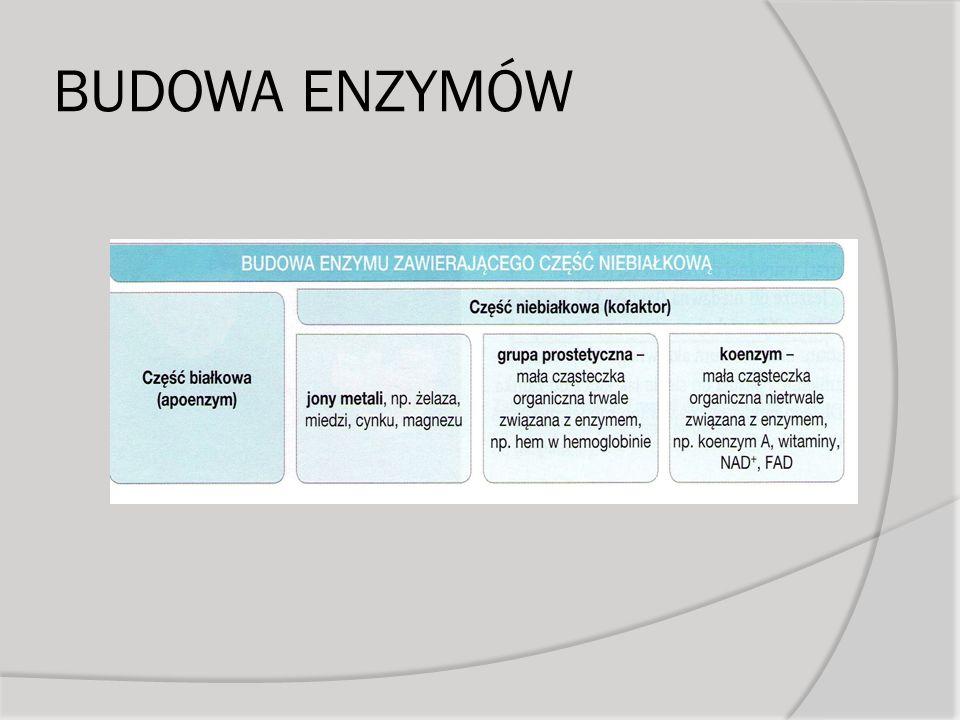 Klasyfikacja enzymów