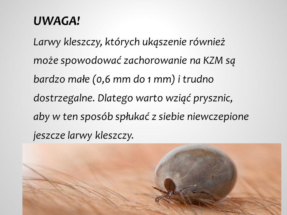 UWAGA! Larwy kleszczy, których ukąszenie również może spowodować zachorowanie na KZM są bardzo małe (0,6 mm do 1 mm) i trudno dostrzegalne. Dlatego wa