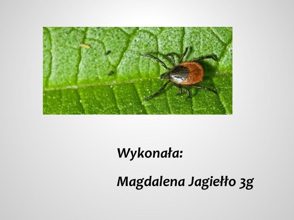 Wykonała: Magdalena Jagiełło 3g