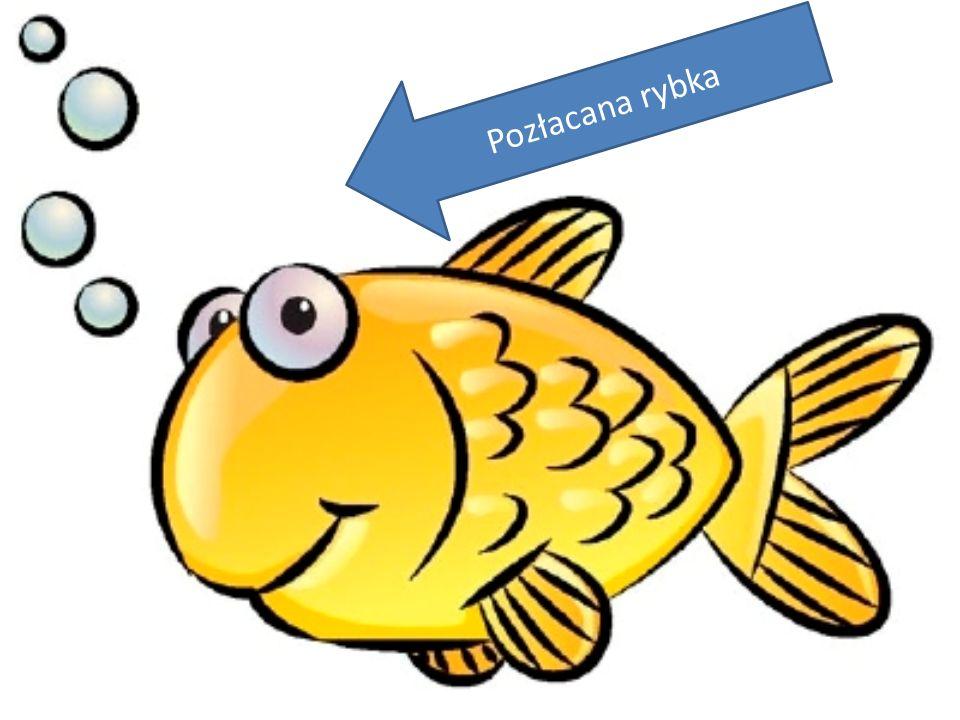 Pozłacana rybka