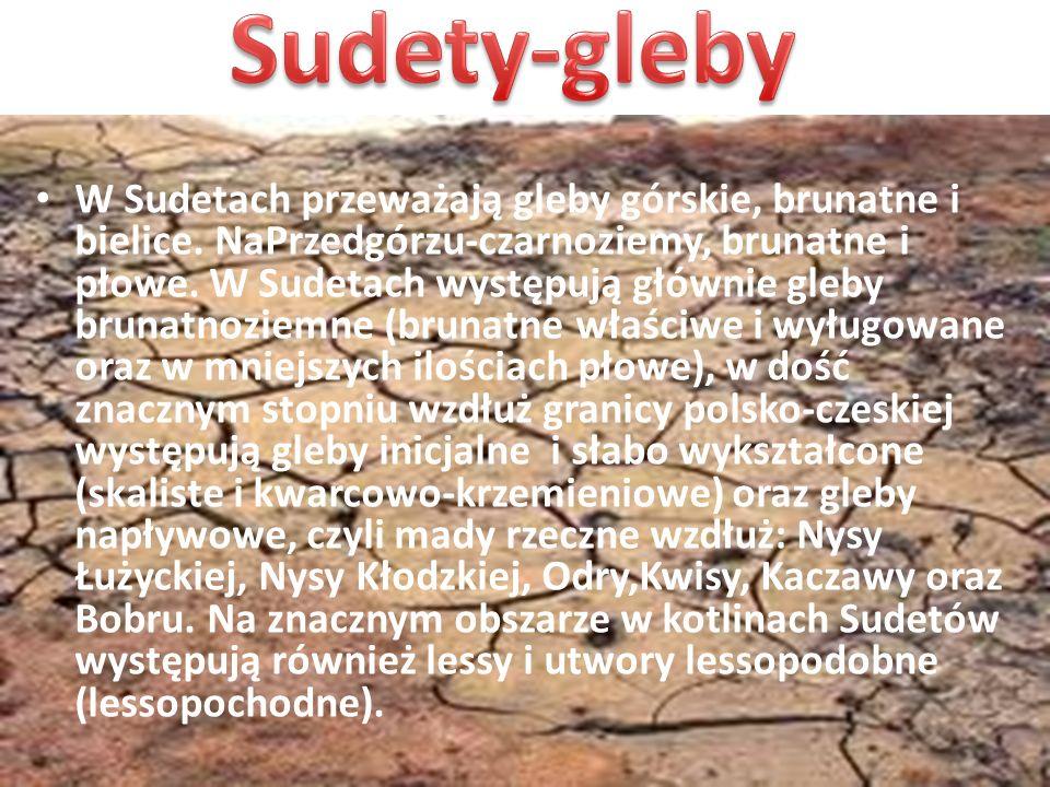 W Sudetach przeważają gleby górskie, brunatne i bielice. NaPrzedgórzu-czarnoziemy, brunatne i płowe. W Sudetach występują głównie gleby brunatnoziemne