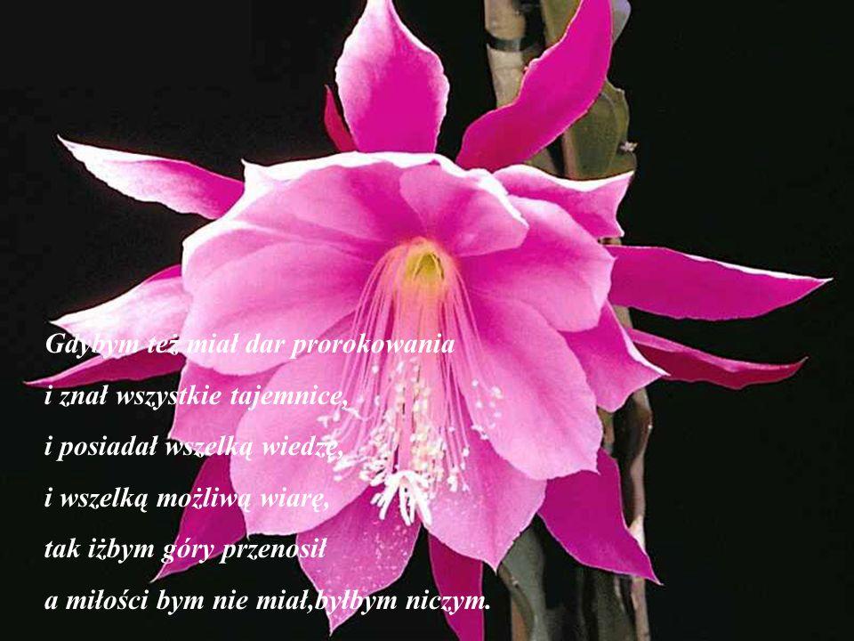 Gdybym mówił językami ludzi i aniołów a miłości bym nie miał stałbym się jak miedź brzęcząca albo cymbał brzmiący.
