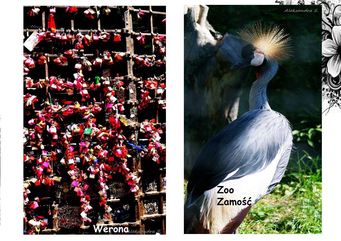 Zoo Zamość Werona