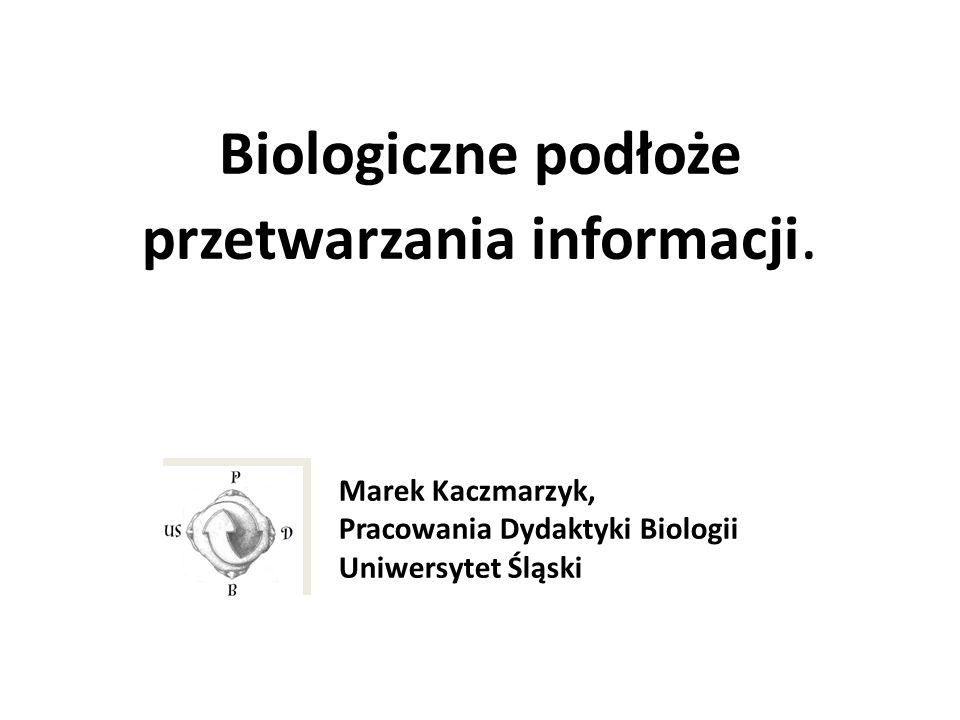 Biologiczne podłoże przetwarzania informacji. Marek Kaczmarzyk, Pracowania Dydaktyki Biologii Uniwersytet Śląski
