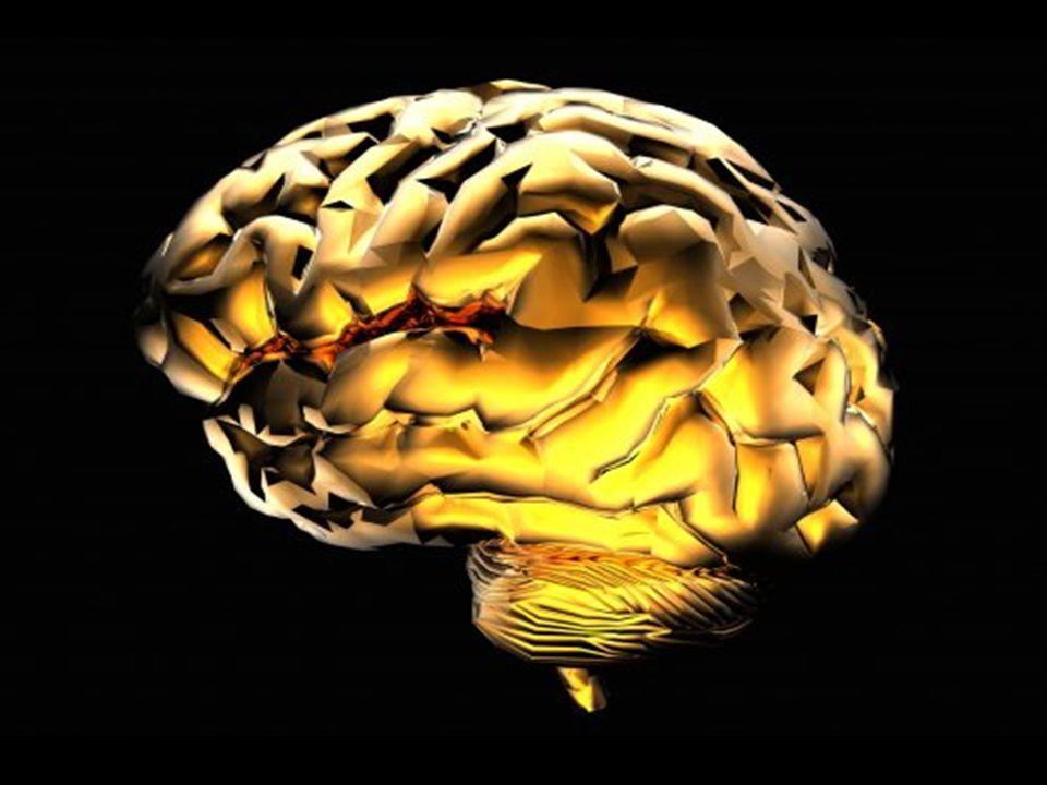 Mózg w przebudowie Niski poziom melatoniny – hormonu odpowiedzialnego za rytm dobowy.